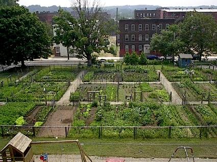 Carthageagriculture Urban Agriculture 3