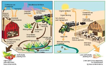process of farming The agricultural cycle is the annual cycle of activities related to the growth and harvest of a crop these activities include loosening the soil, seeding, special watering, moving plants when they grow bigger, and harvesting, among others.