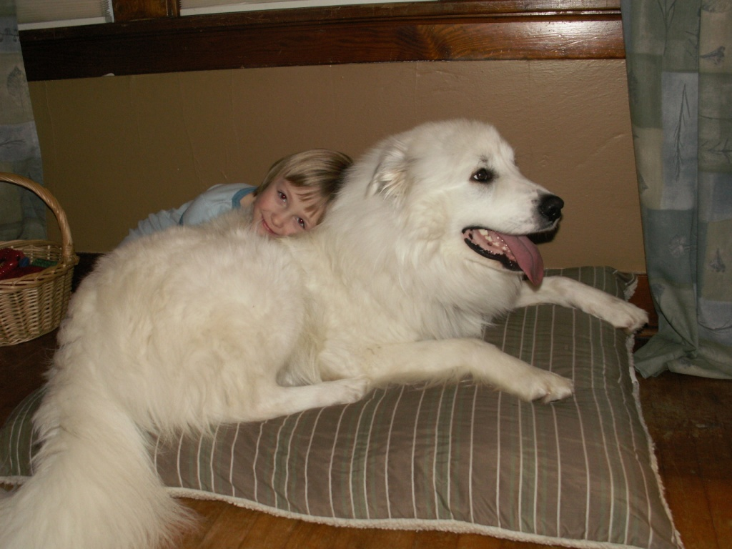 Carthageagriculture Great Pyrenees 4